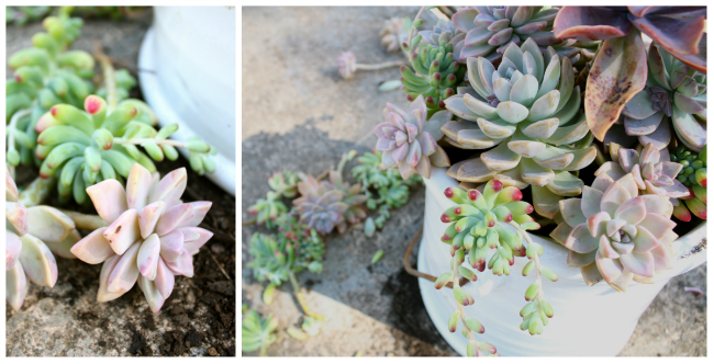 BROOKEEVA.COM SUCCULENTS 4