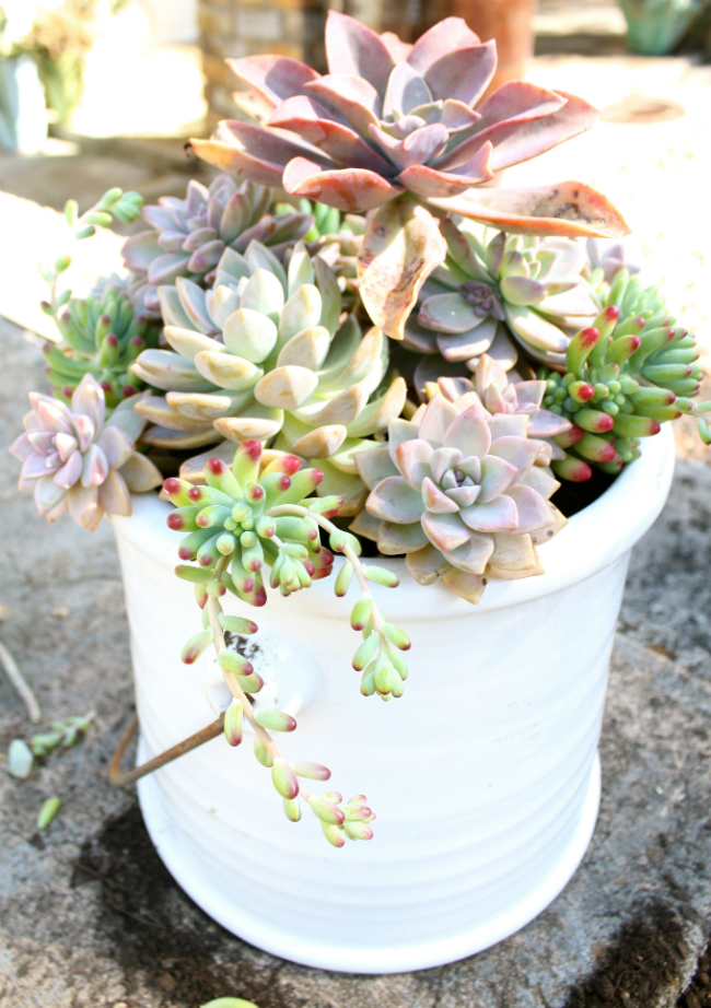 BROOKEEVA.COM SUCCULENTS 6