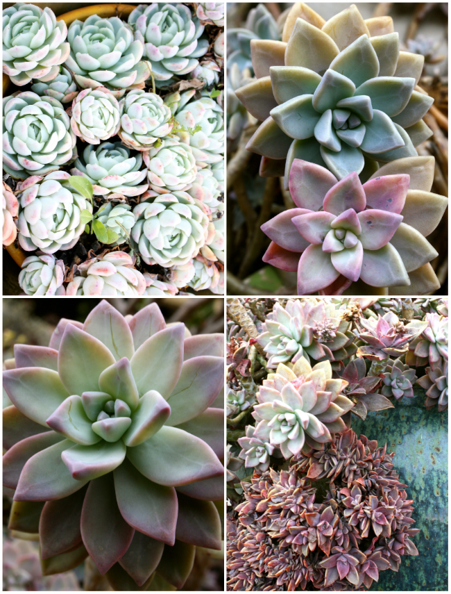 BROOKEEVA.COM SUCCULENTS